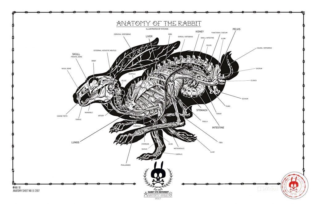 Rabbit statistics - reproduction, anatomy, physiology