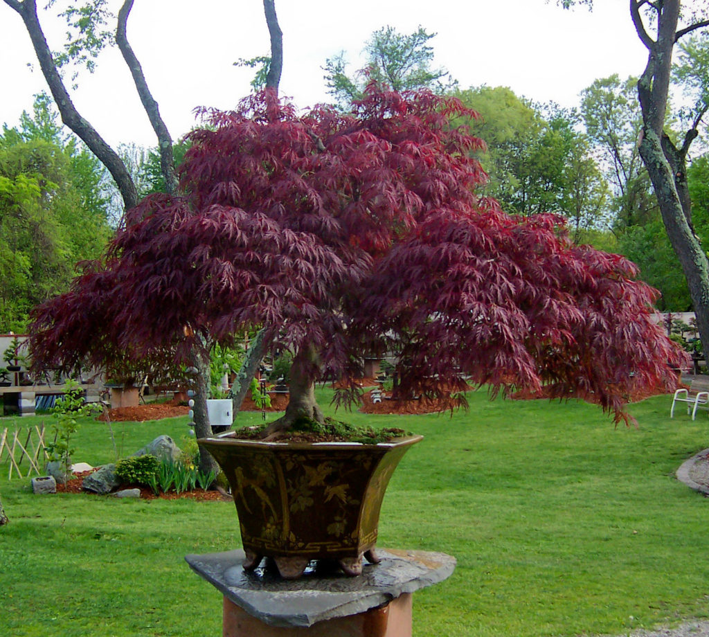 Useful Tips For Planting Container Trees