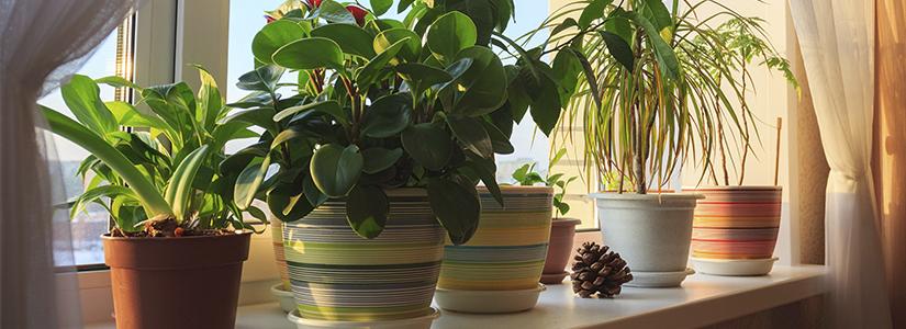 Why You Should Grow Indoor Plants Urbanfarmonline Com