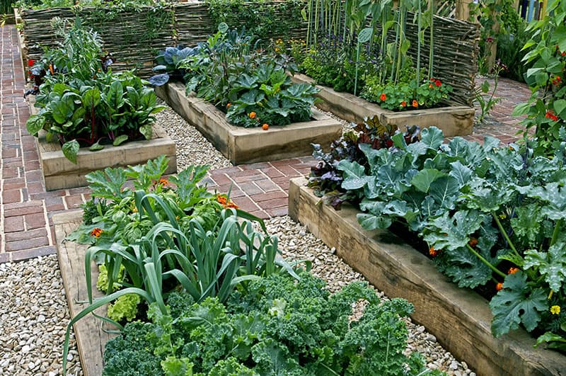 How to Make the Most Out of Your Backyard Vegetable Garden ...