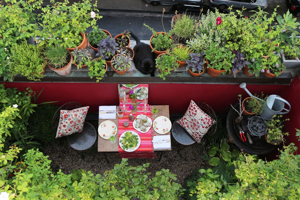 6 Apartment Gardening Tips For Renters With Limited Space
